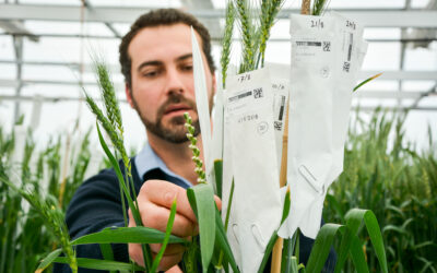 Maximising productivity and managing risk through robust characterisation of variety specific response to agronomic practices (AGT0113)