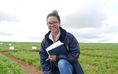 Improving weed control in new herbicide tolerant lentils (S316)