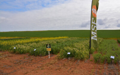Adopting Profitable Crop Sequences in the South Australian Mallee (MSF115)