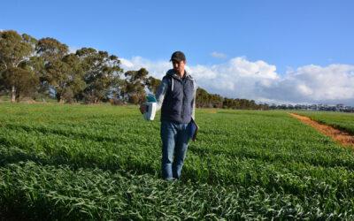 New field-based tools to rapidly assess crop nitrogen and stress status (UA316)