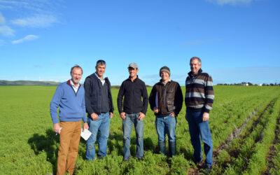 Increasing lentil productivity on dune and swale soils (TC116)