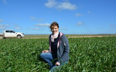 Grains research internships (S1513 and S916)