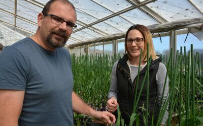 Development of Wheat Population using Speed Breeding for Salinity Tolerance (UA317)