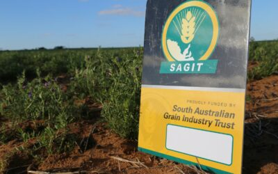 SAGIT announces $2.45m in new funding for grain research