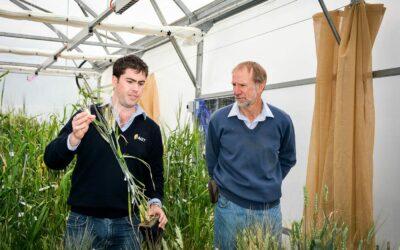 Genetic characterisation and exploitation of heat stress tolerant wheat germplasm (AGT0311)
