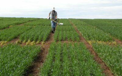 Matching seed source and target environment to improve cereal production in SA (S0711)