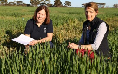 Enhancing the grain yield and quality of oat under water deficits (S1207)