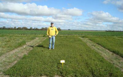 Development of a strand medic cultivar resistant to powdery mildew (S1213)