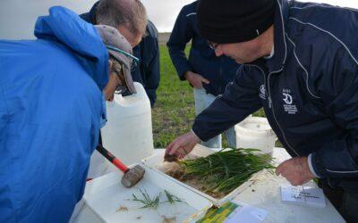 Impact of seeding time and Pratylenchus neglectus on Rhizoctonia fungicide yield responses (SARDI215)